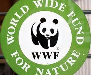 Job Opportunity at WWF-Leader-Living with Big Cats Initiative